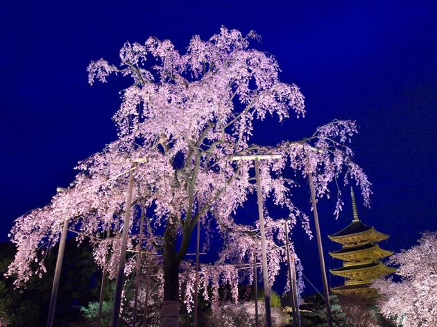 京都県・東寺