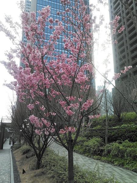 大阪 中ノ島 四季の丘