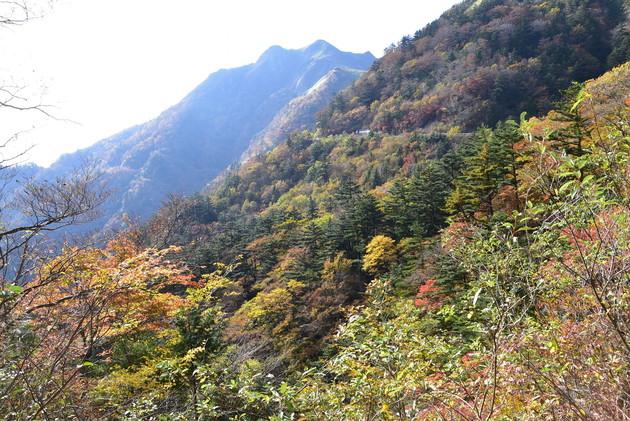 瓶ヶ森林道 伊予富士(1756m)