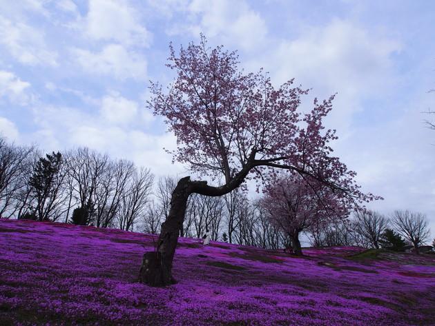 北海道 太陽の丘公園