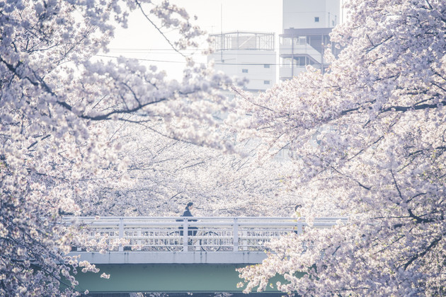 恩田川(東京都町田市)