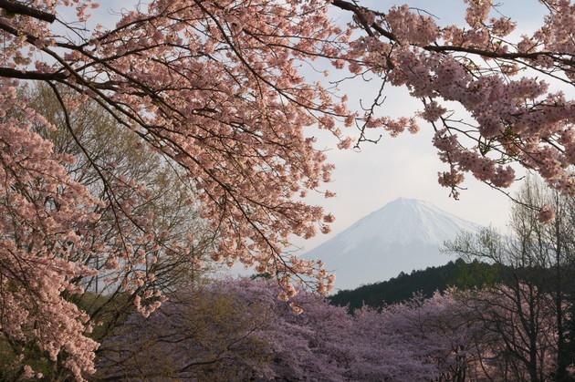 静岡県富士市岩本山公園