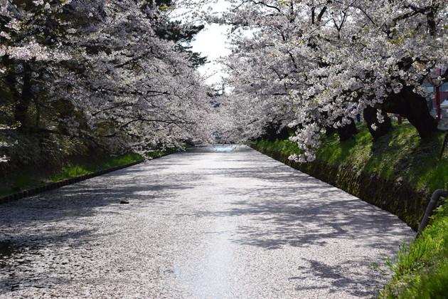 弘前公園外堀