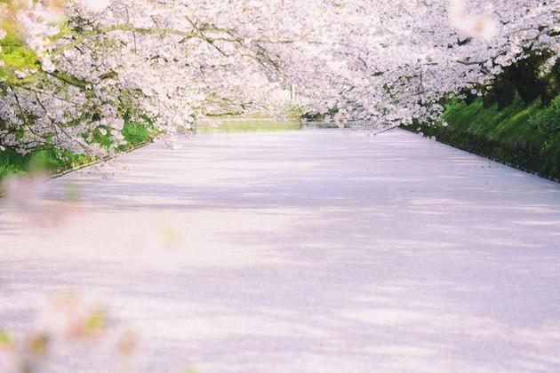 弘前公園 追手門
