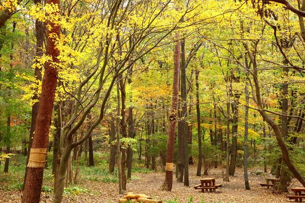 赤城自然園  渋川市赤城町
