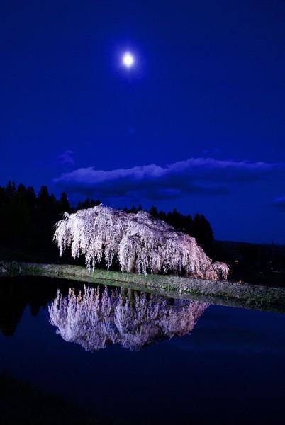 棚倉町 花園の桜