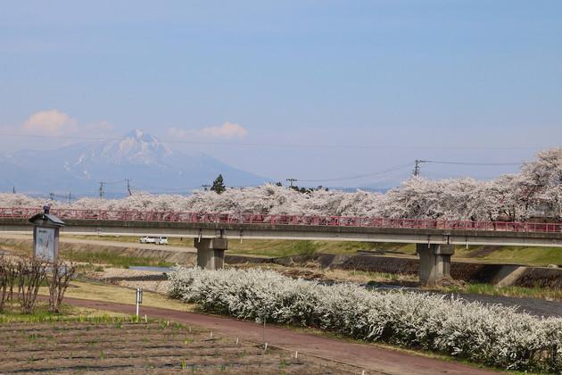 福島県、宮川千本桜