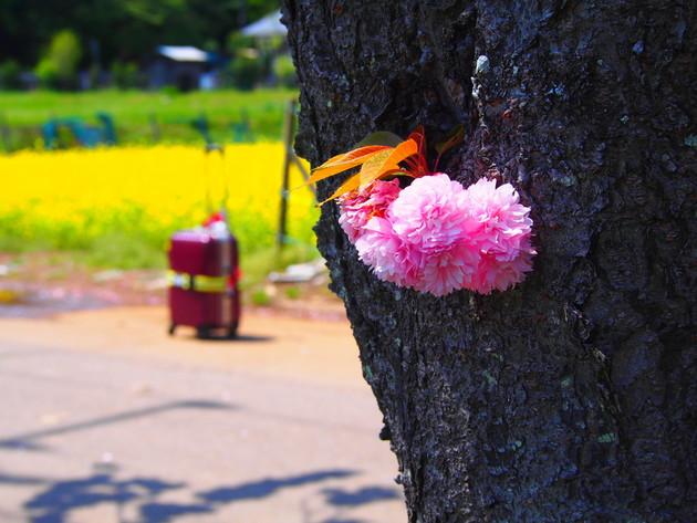 千葉県あけぼの山農業公園
