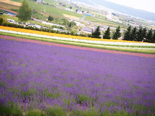 北海道中富良野町
