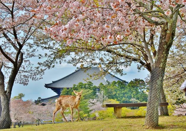 奈良公園  奈良市