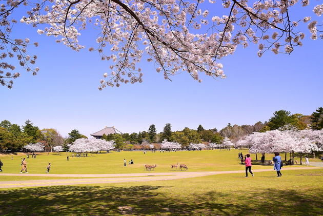 奈良公園春日野園地