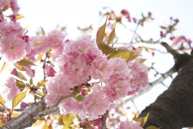 世田谷区桜新町