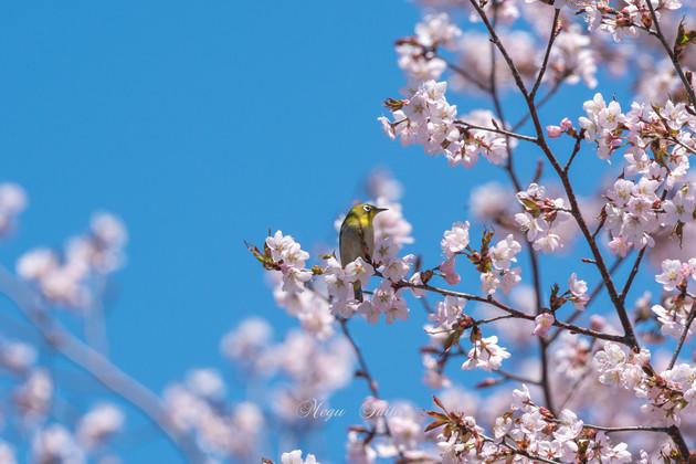 札幌市西岡公園