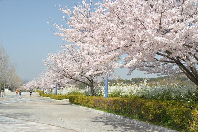 愛知県岡崎市中央総合公園