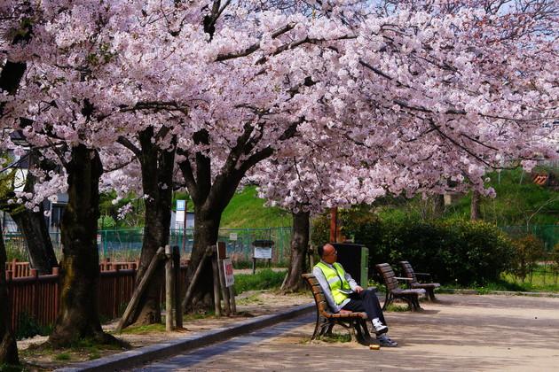 大阪府吹田市岸辺 紫金山公園