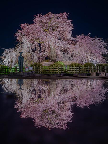 京都市円山公園