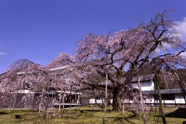 京都 醍醐寺