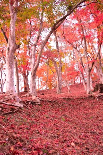 修善寺自然公園