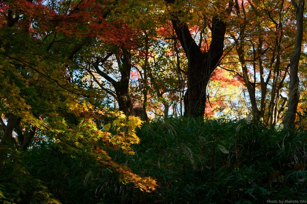 奈良県斑鳩町 竜田公園