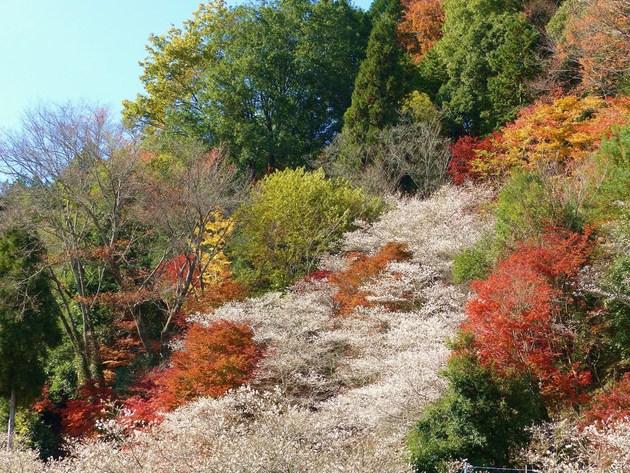 小原四季桜の里