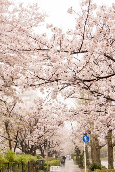 神奈川県横浜市栄区