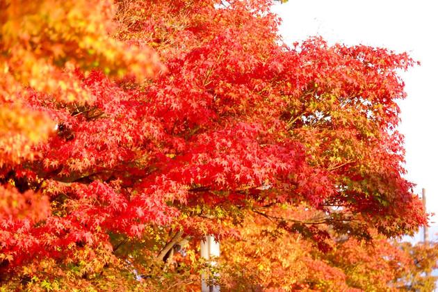米沢市松ヶ崎神社