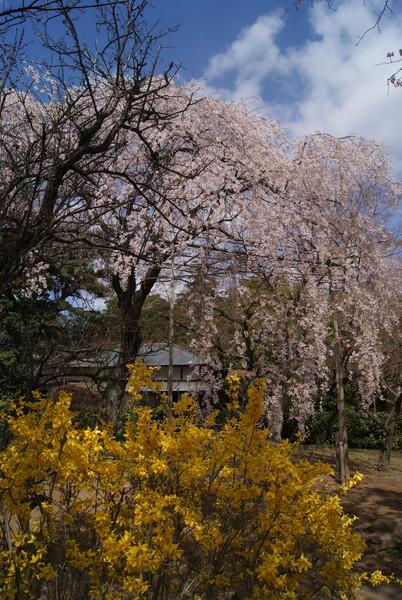 千葉県野田市清水公園