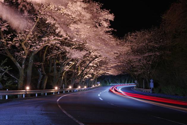 神奈川県箱根ターンパイク