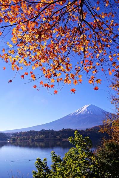 山梨県富士河口湖町 紅葉トンネル