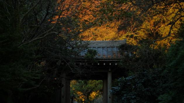 鎌倉市 円覚寺