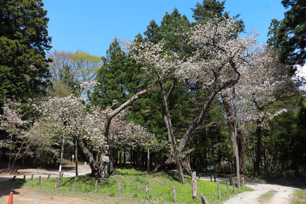 福島県、磐椅神社