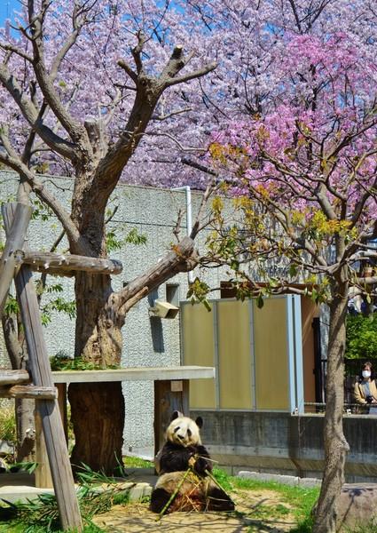 神戸市 王子動物園