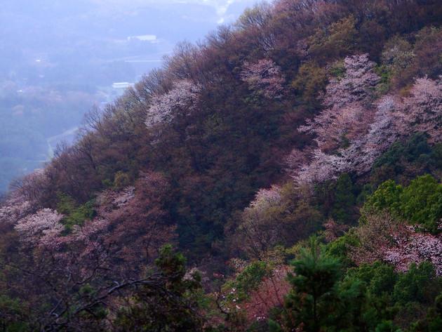 茨城県 桜川市 高峰