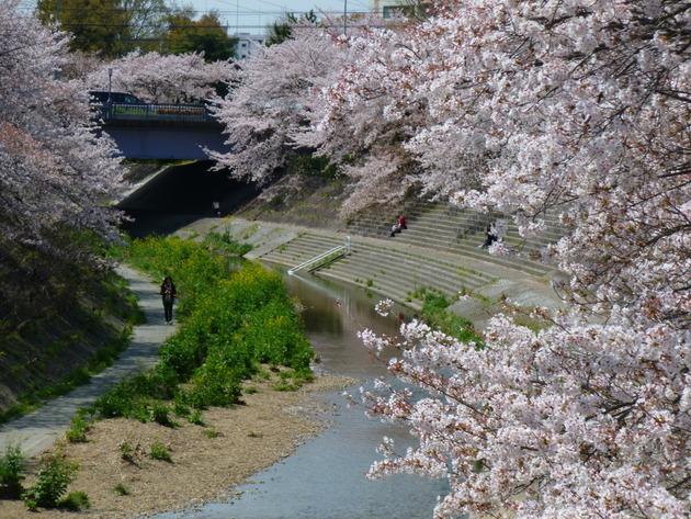 名古屋市山崎川四季の道