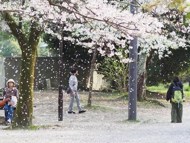 山科の疏水沿い、京都