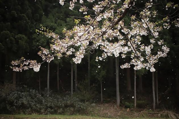 寺家公園 富山市