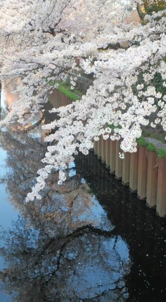 武蔵関近くの石神井川