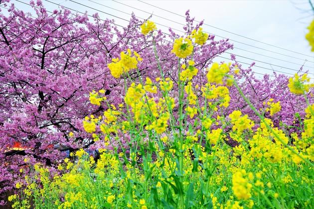 河津町、静岡県
