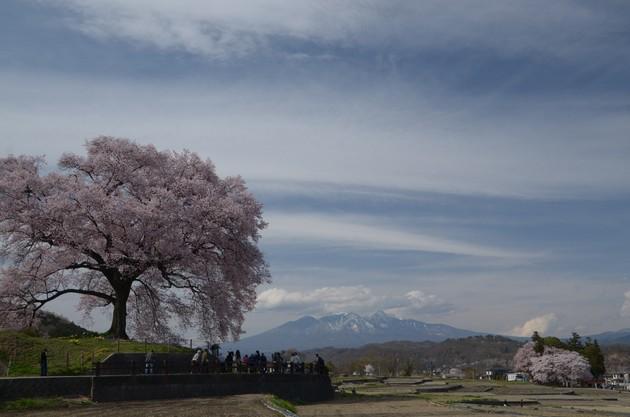 山梨県韮崎市・わに塚の桜