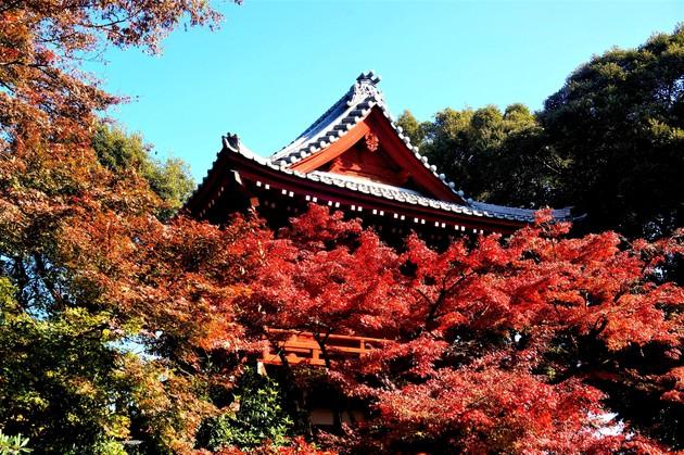 千葉県松戸本土寺