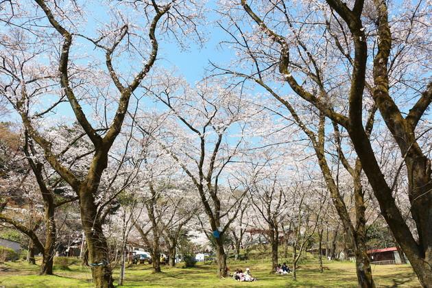 神奈川県厚木市 飯山観音前