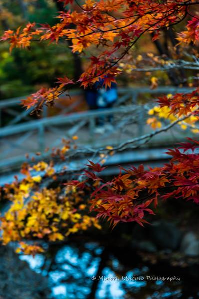 函館市 見晴公園
