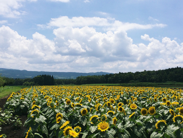 熊本県西原村