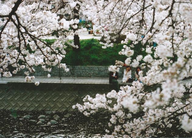 五条川 桜まつり