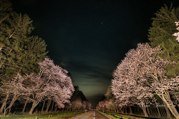 北海道静内二十間道路