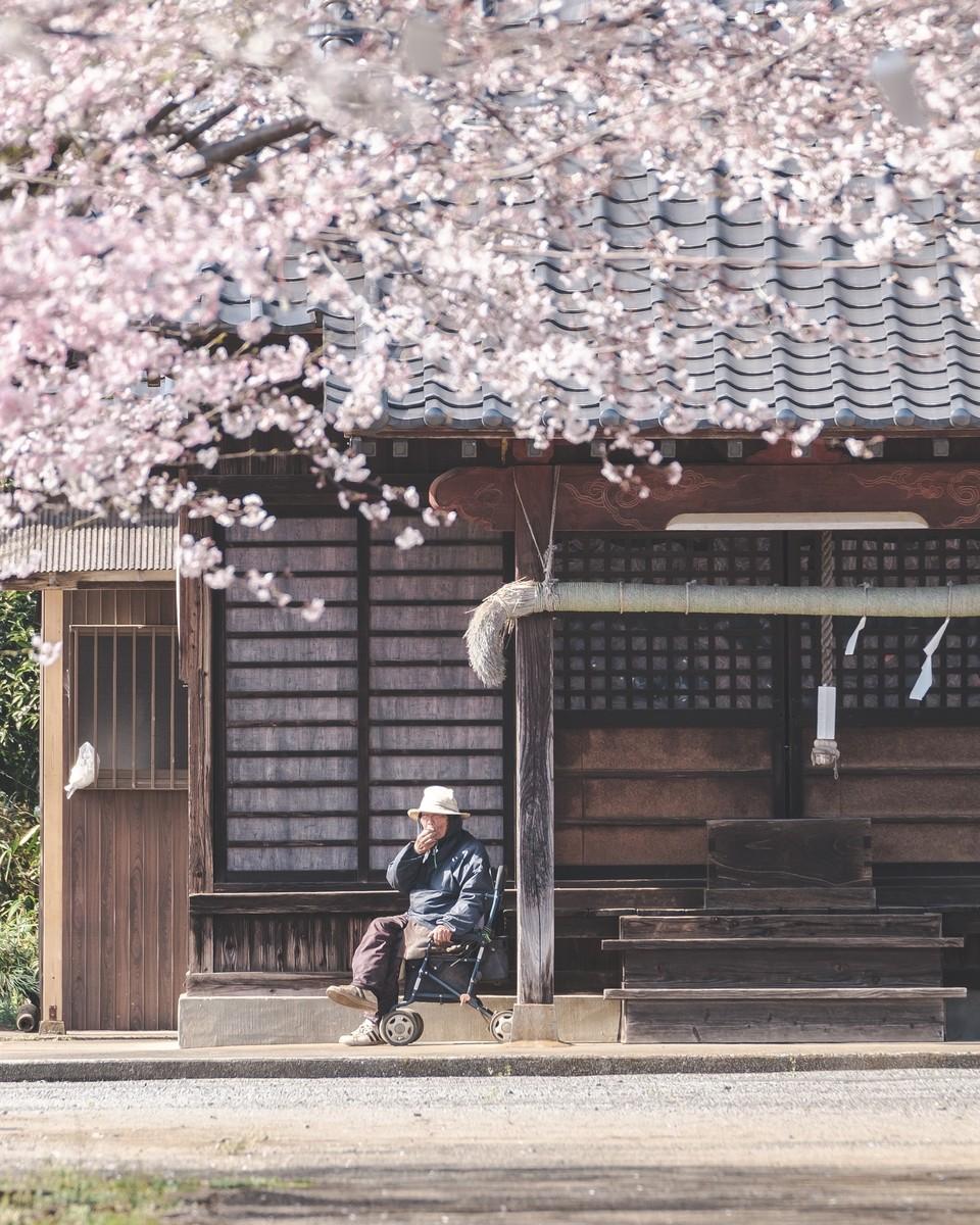 フォトコンテスト「桜」2019審査員賞