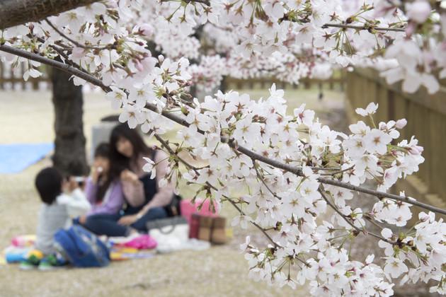 山梨県舞鶴城公園
