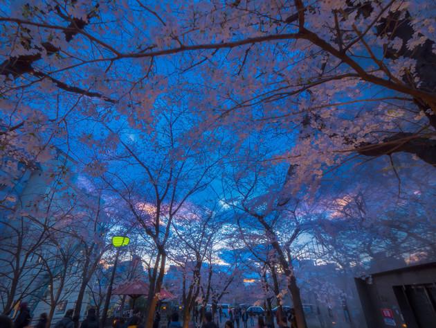 京都市祇園白川