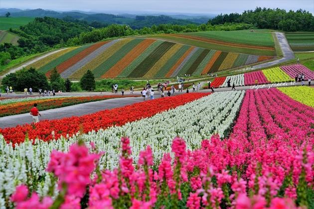 四季彩の丘、北海道美瑛町