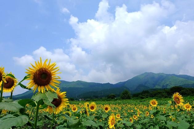 熊本県阿蘇
